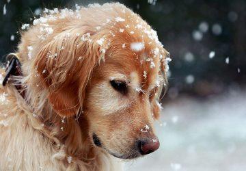 7657e2c2208e Προστατέψτε τα οικόσιτα αλλά και τα αδέσποτα ζώα από το κρύο ...
