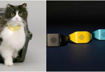 17d330cdc62c Φορέστε αυτό το κολάρο στη γάτα σας και μιλήστε μαζί της - Petpet.news