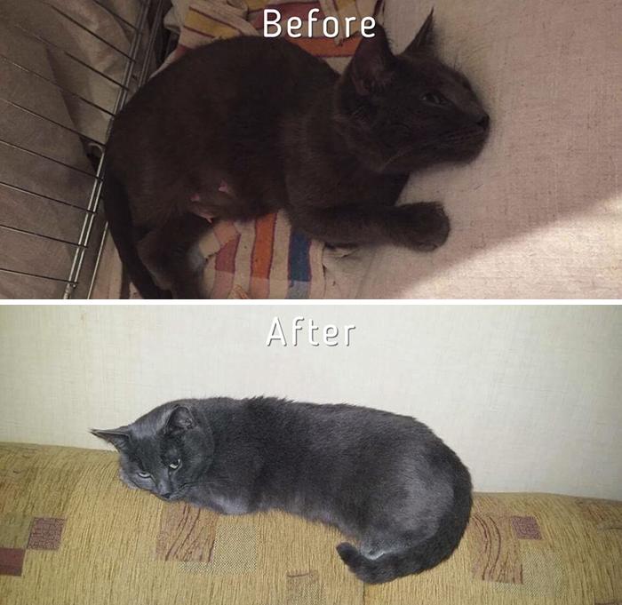 59958a510fe3 Η Zanda είναι εθελόντρια του μη κερδοσκοπικού οργανισμού Cat Care  Community