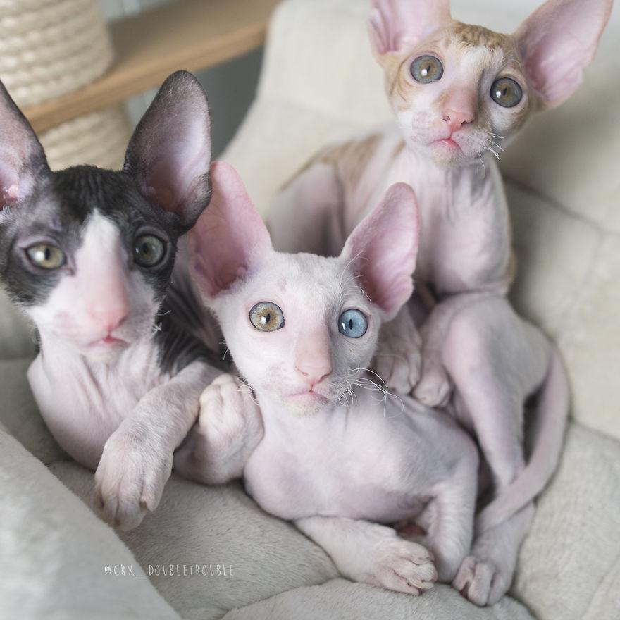 02ccc08911d7 Τα εμβόλια που πρέπει να κάνετε στη γάτα σας - Petpet.news