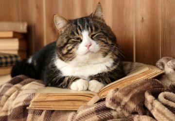 69f567e78c14 Γιατί οι γάτες τρελαίνονται να κάθονται στον υπολογιστή ή στα βιβλία μας  -  Petpet.news
