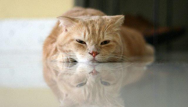 8b1fc58b1d5b Μας αγαπούν οι γάτες  5 σημάδια που λένε ναι - Petpet.news