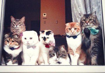 37405e2523b5 Πώς θα κάνετε τη γάτα σας να ζήσει μέχρι τα 20...και παραπάνω ...