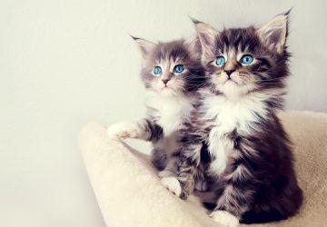 970c9d7b6f33 4 πράγματα που ίσως δεν ξέρετε για τα γατάκια - Petpet.news