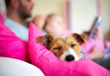 0739f261d561 Πότε κοιμόμαστε καλύτερα  Με το σκύλο στο κρεβάτι μας ή όταν αυτός ...