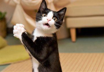 ecce19d56ebe 7 πράγματα που μισούν οι γάτες να τους κάνουμε (αλλά εμείς τους ...