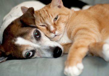 d79b5ae53ca7 8 tips που θα βοηθήσουν μια γάτα και ένα σκύλο να ζήσουν μαζί ...