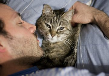fb7844e85666 5 λόγοι που η γάτα σας κοιμάται μαζί σας - Petpet.news