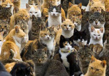 582f2f4279e6 Αυτές είναι οι 10 χώρες με τις περισσότερες γάτες - Petpet.news