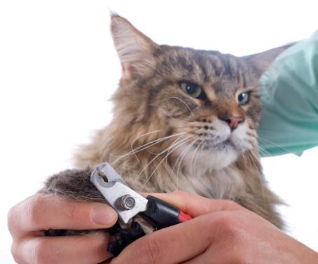 94d1b6d2a89c Το να φροντίζουμε τα νύχια της γατούλας μας είναι πολύ σημαντικό για την  υγεία της. Οι περισσότερες γάτες έχουν 18 νύχια – πέντε σε κάθε μπροστινό  πόδι και ...