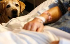 """af669c264b35 Τα σκυλιά-θεραπείας κάνουν θαύματα. Tους αρέσει όμως αυτή η """"δουλειά """""""