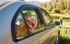 b6a25894c3e0 Μπορώ να αφήσω το σκύλο μου στο αυτοκίνητο με ανοιχτό παράθυρο