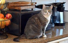 e43bbaf7864c Έξυπνα τρικ για να κρατήσετε τη γάτα σας μακριά από τον πάγκο της κουζίνας