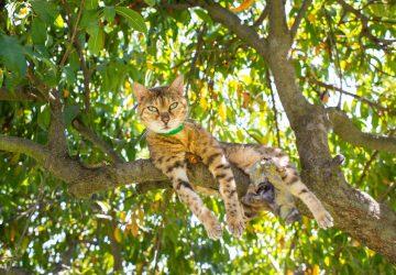 83264765e485 Πόσα χρόνια μπορεί να ζήσει μια γάτα  - Petpet.news