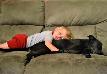 d064c947f678 Να γιατί τα σκυλιά είναι καλύτερα από τα μαξιλάρια - Petpet.news