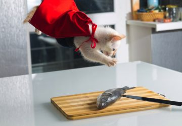 823c91430d0d Γιατί δεν πρέπει να δίνουμε ψάρι στη γάτα μας - Petpet.news