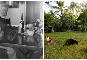 9adc629da02e Ernest Hemingway  Οι εξαδάχτυλες γάτες του και οι απόγονοί τους που ...