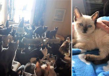 8d362d9ba197 Απίστευτο  Βρήκαν πάνω από 300 γάτες σε ένα δυάρι στον Καναδά