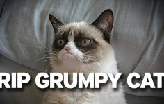7aa5be5f0bd7 Grumpy Cat  Πέθανε η πιο διάσημη γάτα του κόσμου στα 7 της χρόνια