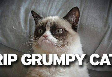 5b1fbecea60a Grumpy Cat  Πέθανε η πιο διάσημη γάτα του κόσμου στα 7 της χρόνια