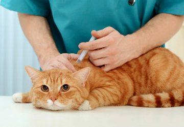 ceef42ef32c3 Εμβόλια γάτας  Απαντήσεις σε 4 βασικά ερωτήματα